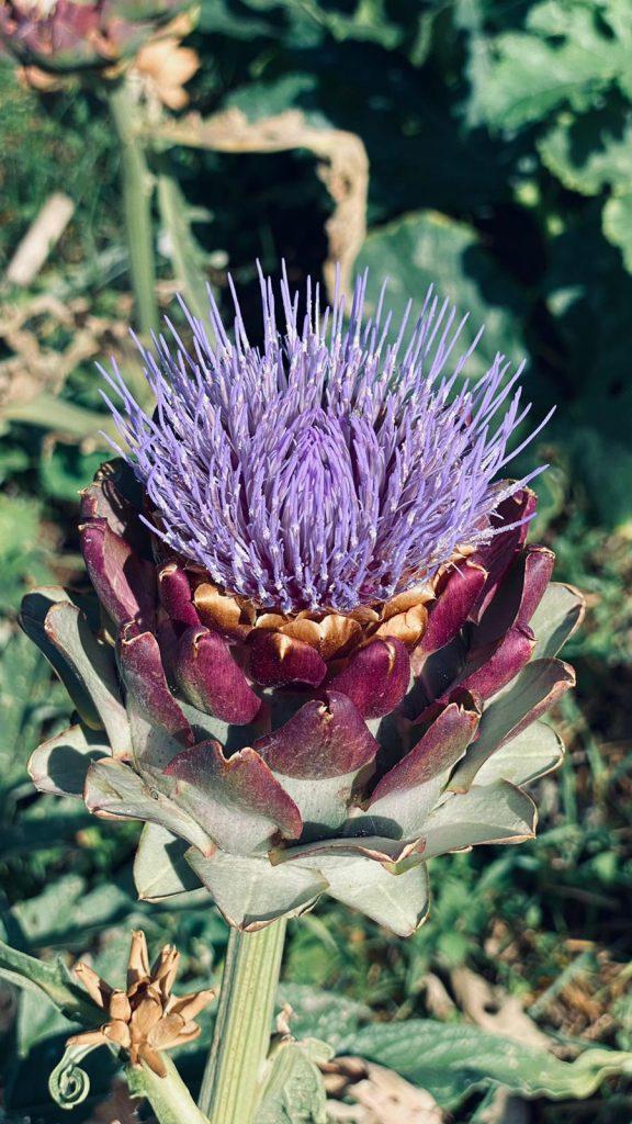 blooming Yoga & Gardening Portugal