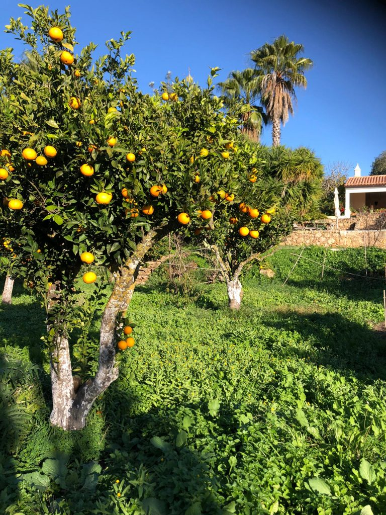 Yoga Gardening- Algarve